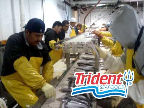 trident 7